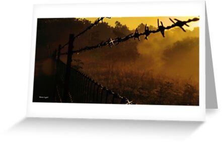 Dawn by Thomas Eggert