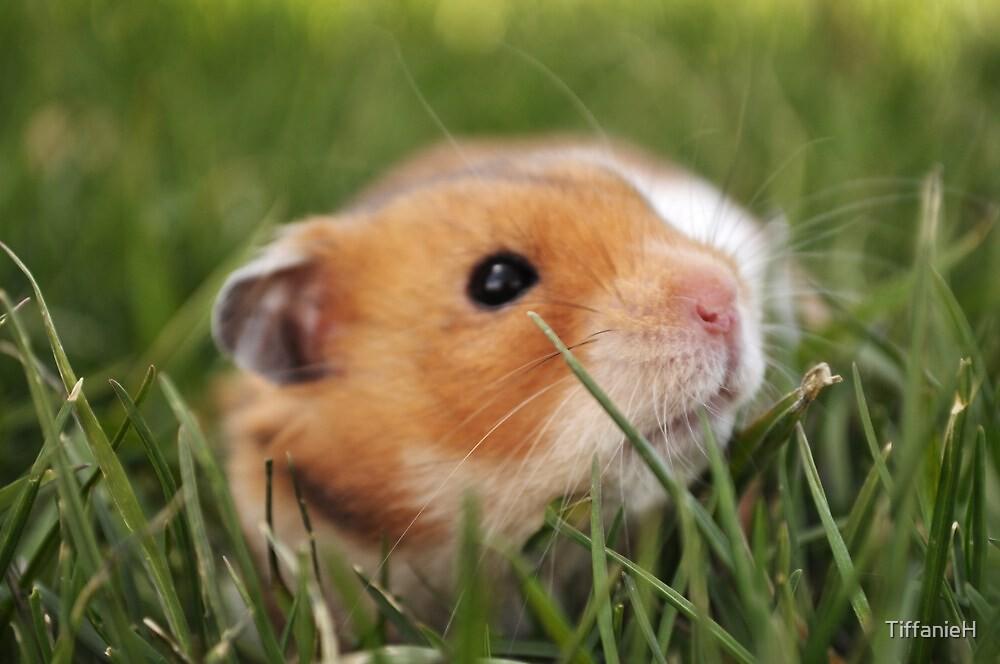 Hiding in the Grass by TiffanieH
