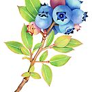 Wild Maine Blueberry Sprig by PatriciaSheaArt