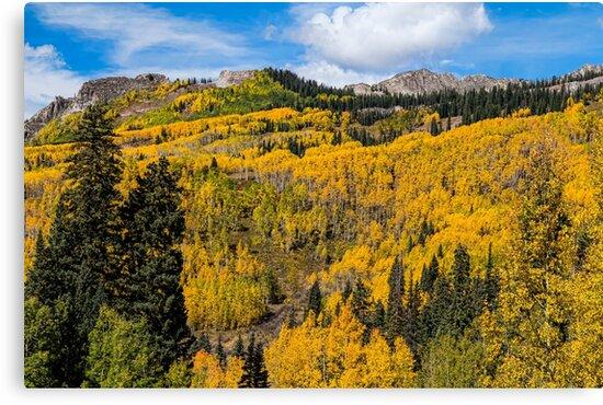 Colorado Golden Autumn Bliss by Bo Insogna