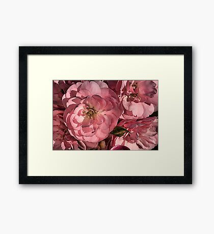 In the Pink with Roses Framed Print