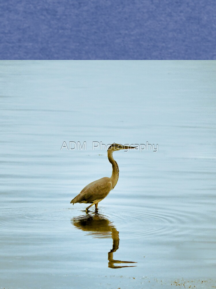 Blue Heron in Water by Dai-Boo