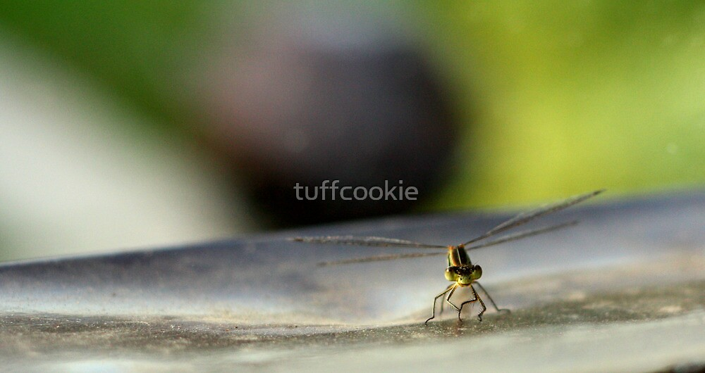 Dragon fly Looking for dinner by tuffcookie