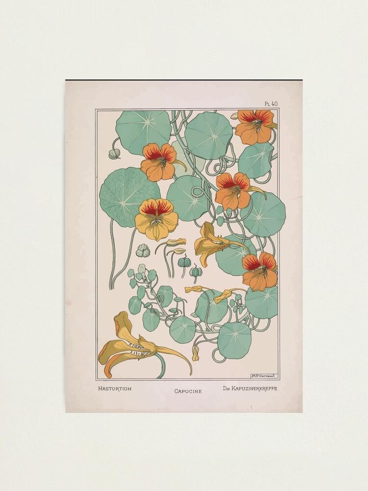 Alternate view of Plante et Ses Applications Ornementales Ornamental Plants Grasset Eugene Maurice Pillard Verneuil 1896 Art Nouveau 0079 Nasturtium Photographic Print