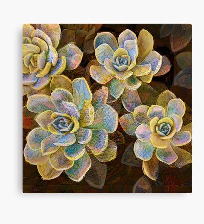 Succulent Rose Canvas Print