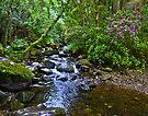 Owengarriff River in Killarney Nat. Park. by Yukondick