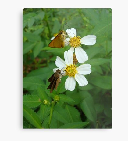 Two little skippers, sip, sip. Metal Print