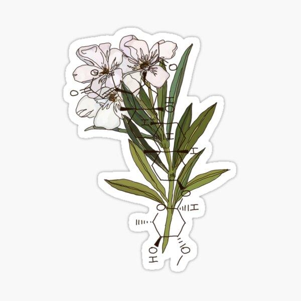 weißer Oleander Sticker