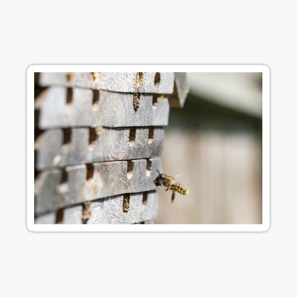 Female Mason Bee brings home the mud Sticker