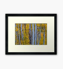 Beautiful Fall Forest Framed Print