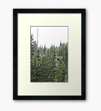 Rocky Pines Framed Print