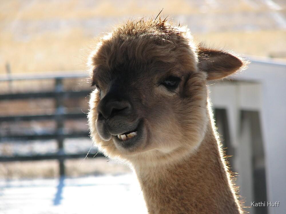 Image Gallery Smiling Alpaca