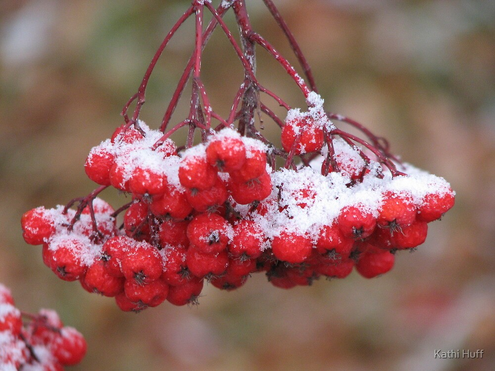 First Snowfall by Kathi Huff