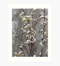 Spring Snow Art Print