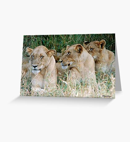LAZY ONE WAY DIRECTION - The Kruger Park lions Greeting Card