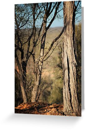 Beyond The Trees, Quilpie © Vicki Ferrari Photography by Vicki Ferrari
