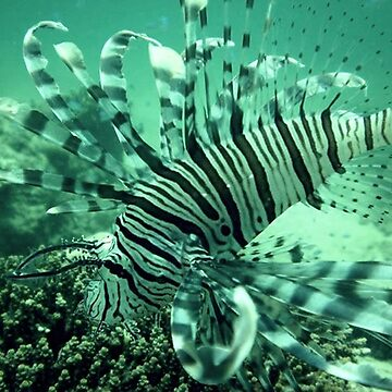 DIVING PIX FROM PHILIPPINES by camz02