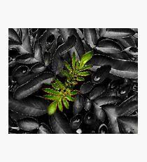 Plant Macro Photographic Print
