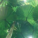 Palms by Dean Bailey