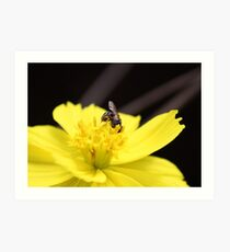 Fly on a flower Art Print