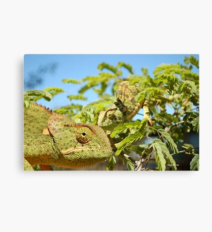 THE CAMELEON VISIT  Canvas Print
