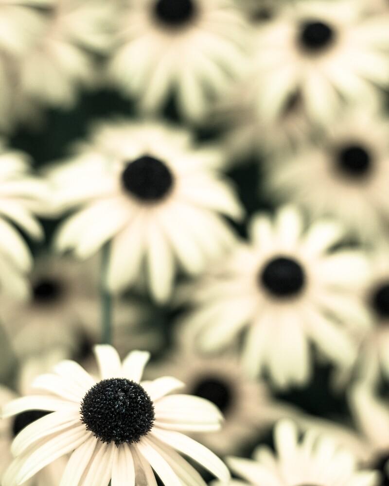 summer flowers 2 by carlrittenhouse