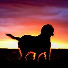 Spinone Sunset Silhouette by heidiannemorris