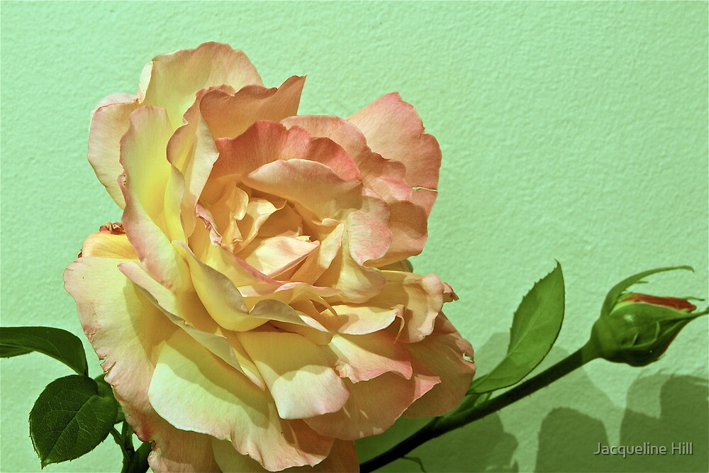 A Rose For Mom by Jacqueline Hill