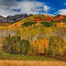 Colorado Kebler Pass Fall Beauty by Bo Insogna