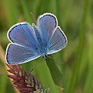 Intens Blue by Robert Abraham