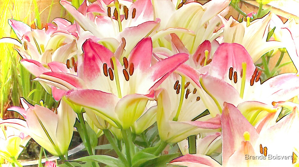 The Lily Patch by Brenda Boisvert