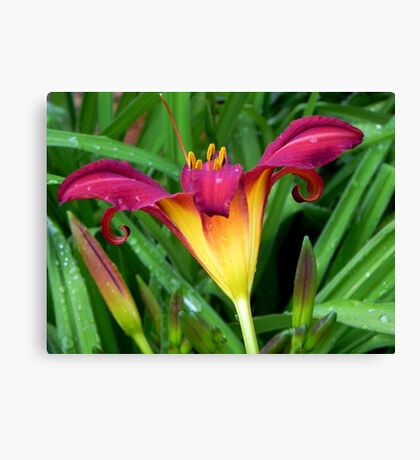 A Pretty Lily!!! © Canvas Print