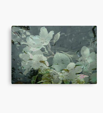 Apple Blossoms 'n' Raindrops Canvas Print