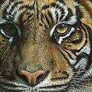 A Tiger Face by artbyakiko