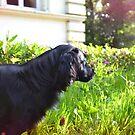 Charlie in the clovers by BrightBrownEyes