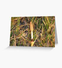 Emerging Reed Greeting Card