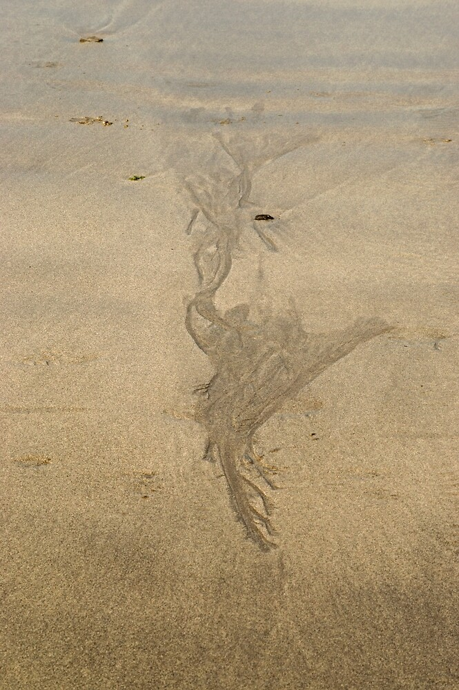Skaill Bay sands 2  by Ian Maclellan