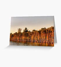 Parramatta River. Greeting Card