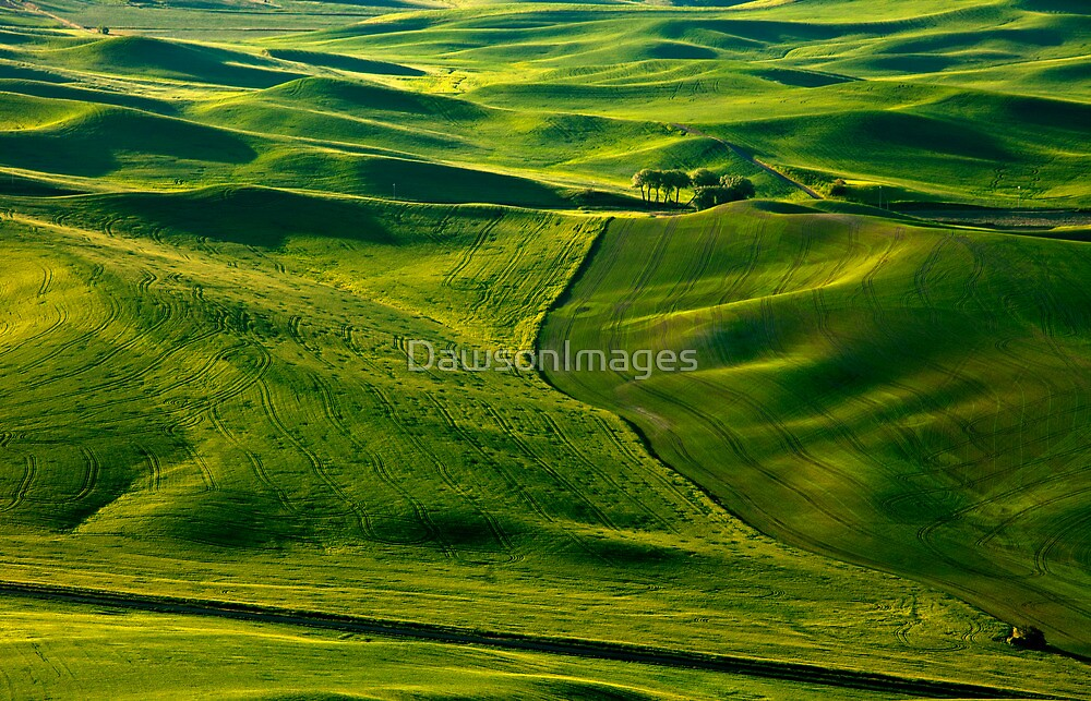 Palouse Patterns by DawsonImages