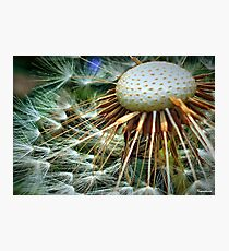 Puffed Out Photographic Print