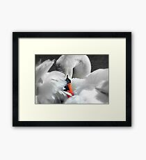Soft As A Feather!  Framed Print