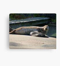 Mother Seal and Cub Canvas Print