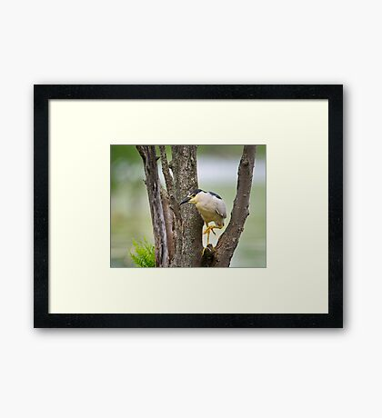 Stalking; One step at a time Framed Print