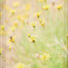 Daisy Time by Linda Trine