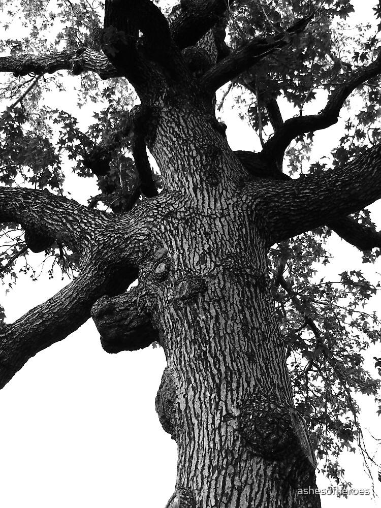 Tall Oak by ashesofheroes