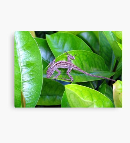 Juvenile Cuban Anole Lizard - Florida Canvas Print
