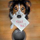 Feed Me? by Jennifer S.