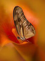 Brown Butterfly on Calia flower by JBlaminsky