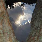 Naturally Framed Sky - Florida by glennc70000