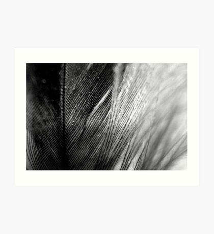 Macro Contrasting Feathers Art Print